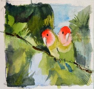 lovebirds studio n3 - p