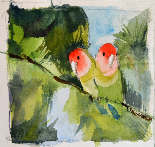 lovebirds studio n3 - p